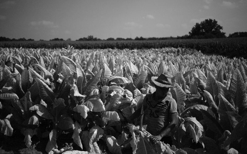 In Kentucky, farmers use groundwater to harvest 85,000 acres of tobacco each year. National Agricultural Statistics Service, 2012. Photo of Tucker Farms in Finchville, KY courtesy of Luke Sharrett.