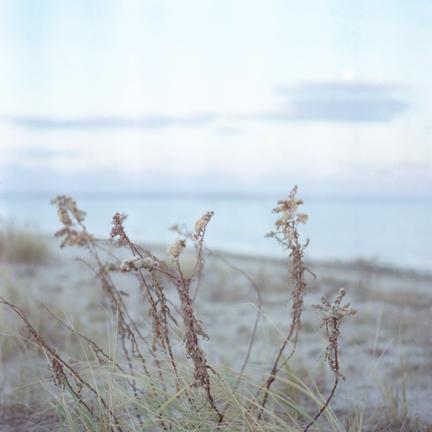 harrsen-solidago-03.jpg