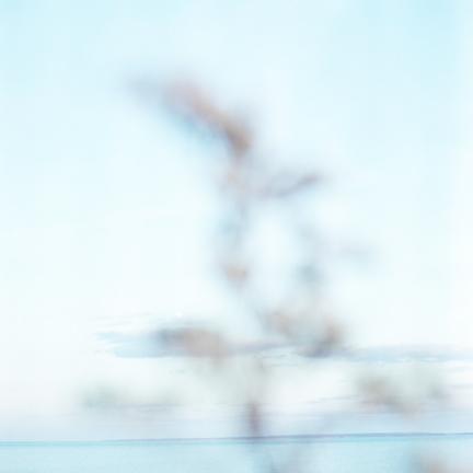 harrsen-solidago-06.jpg