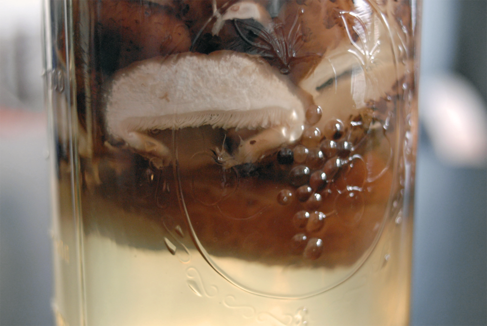 closeup-of-shitake-mushrooms-steeping-in-mason-jar.png