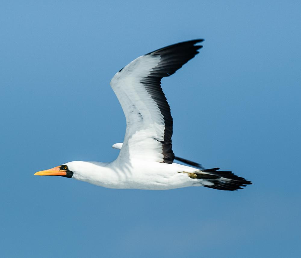 Galapagos 2012-5.jpg