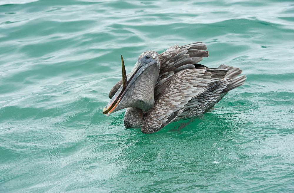 Galapagos 2012-4.jpg