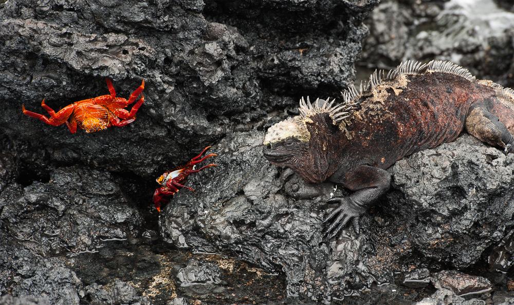 Galapagos 2012-3.jpg