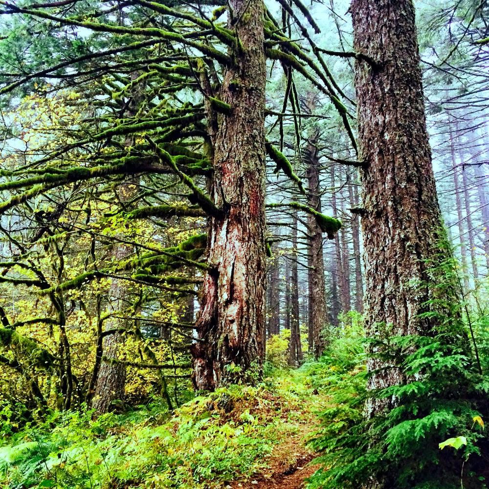 Foxglove Trail