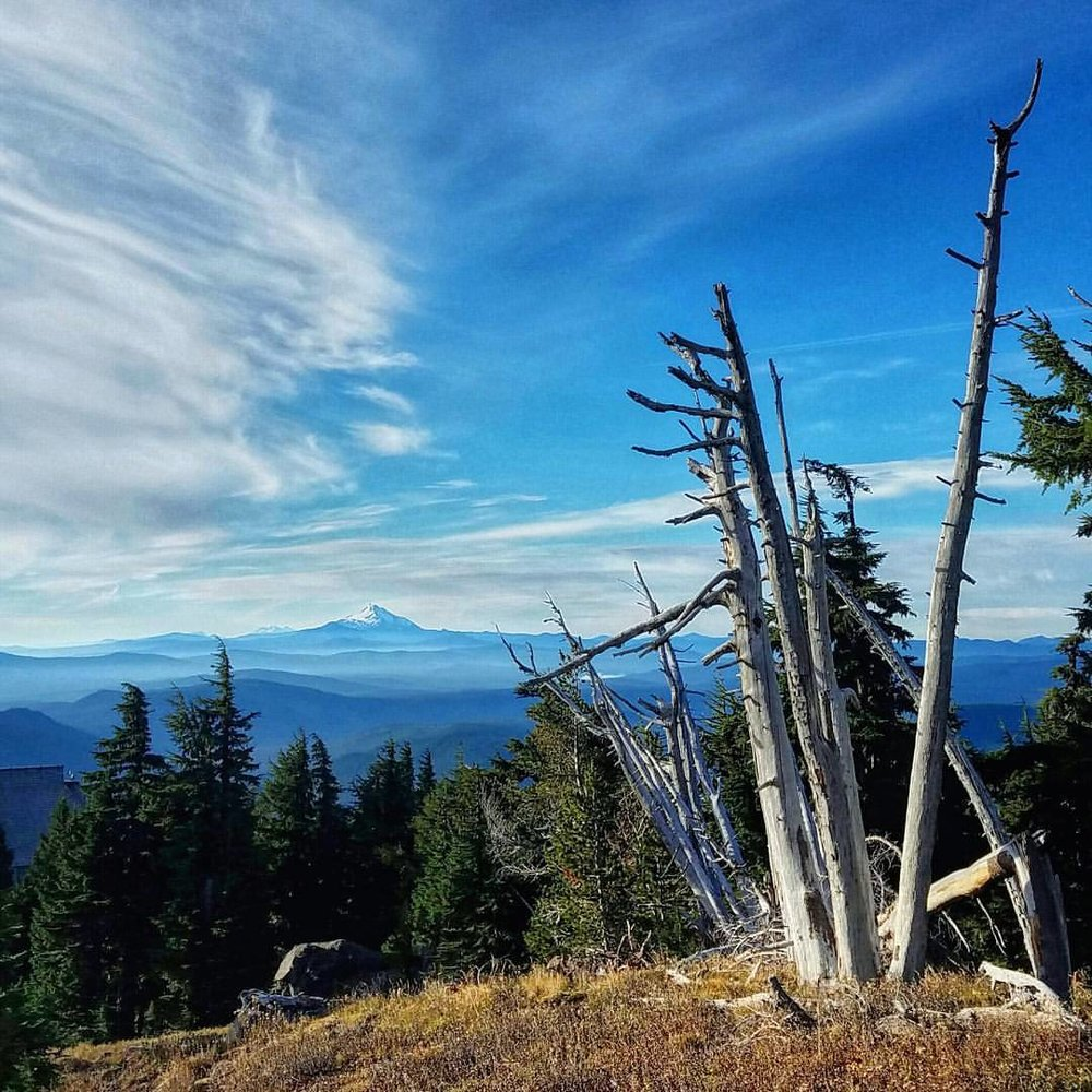 looking south to mount jefferson from timberline meadows