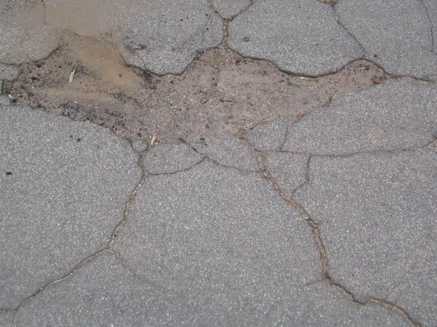 asphalt cracks - bird long leg.jpg