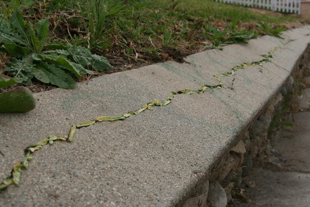 3856 Pueblo Ave - leaves in crack (1).jpg