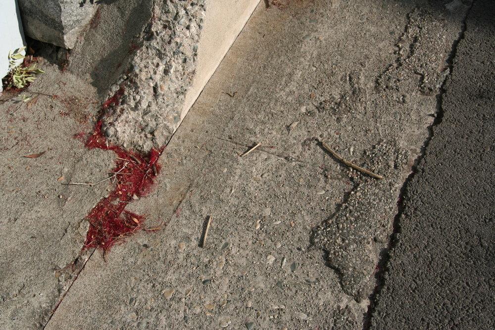 5142 O'Sullivan Dr - red needles under garage.jpg