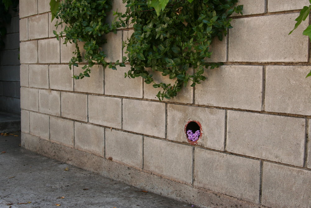 5158 O'Sullivan Drive - flowers in pipe hole (2).jpg