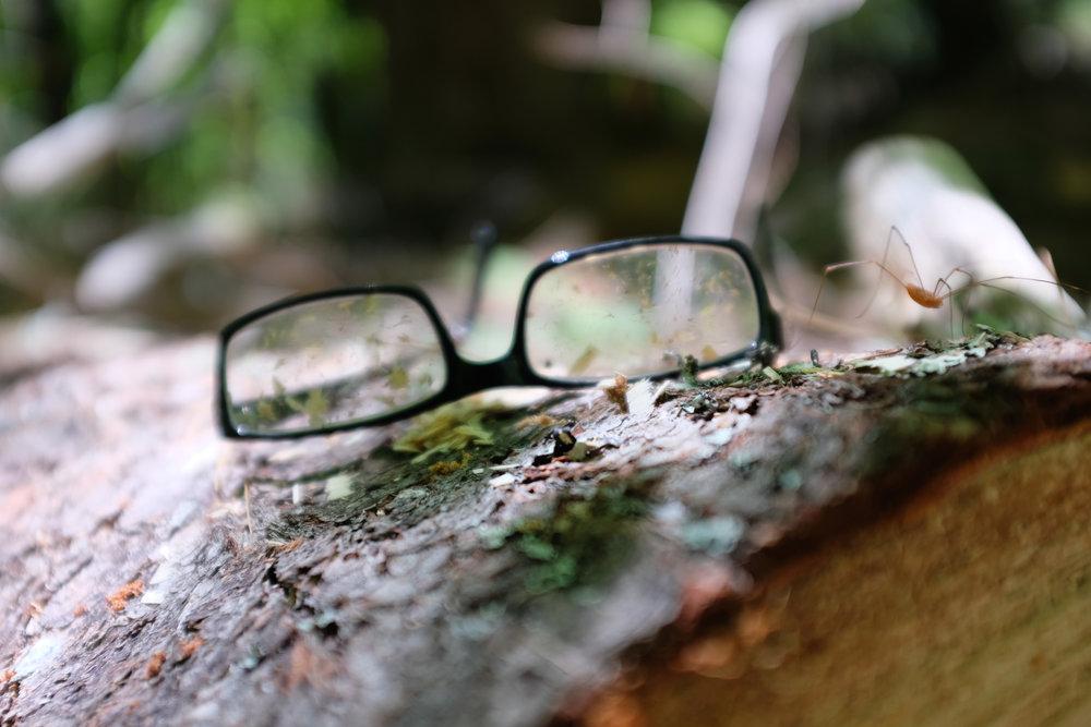 Spider Specs