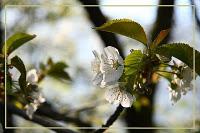Fig Tree Blossom.jpg