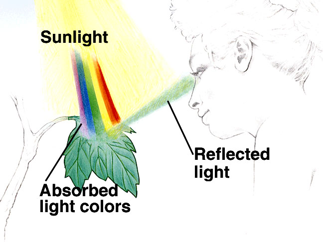 absorb light.jpg