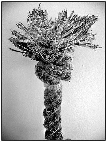 frayed knot.jpg