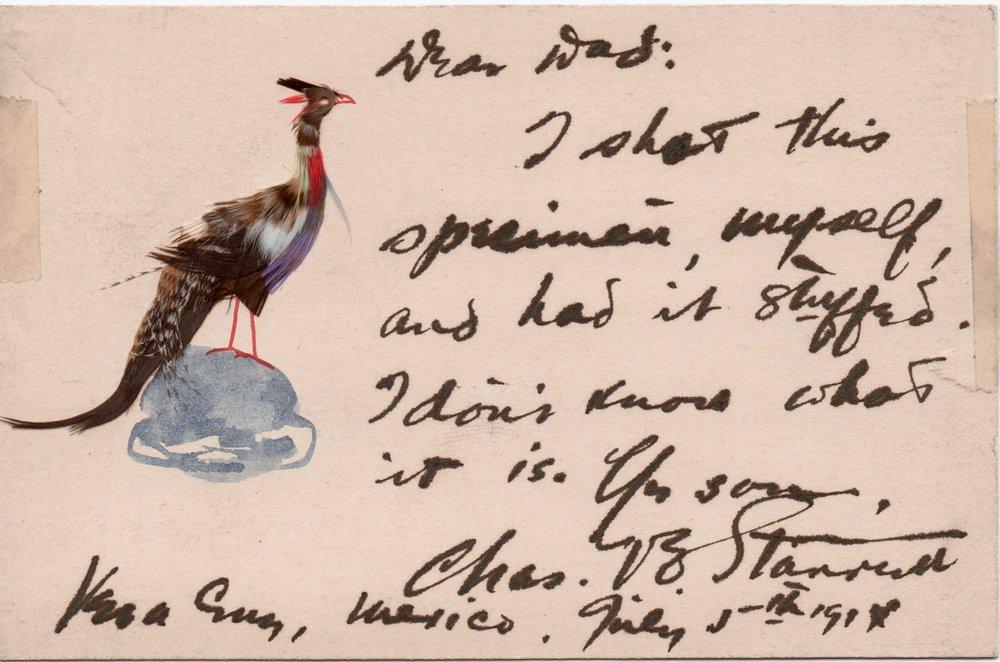 Father's bird card.jpg