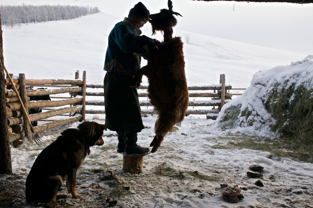 Khasar_S_BoodogMaking_R&K_Terelj_Mongolia_Winter_2013.jpg