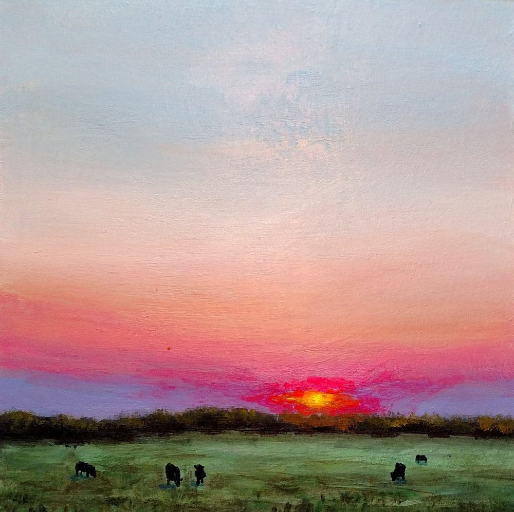 Summer Cows