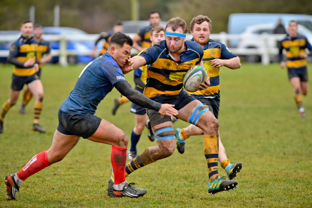 OAKS 1st XV v.BRIGHTON BLUES 1st XV 26 JAN 2019  Photo Credit: David Purday