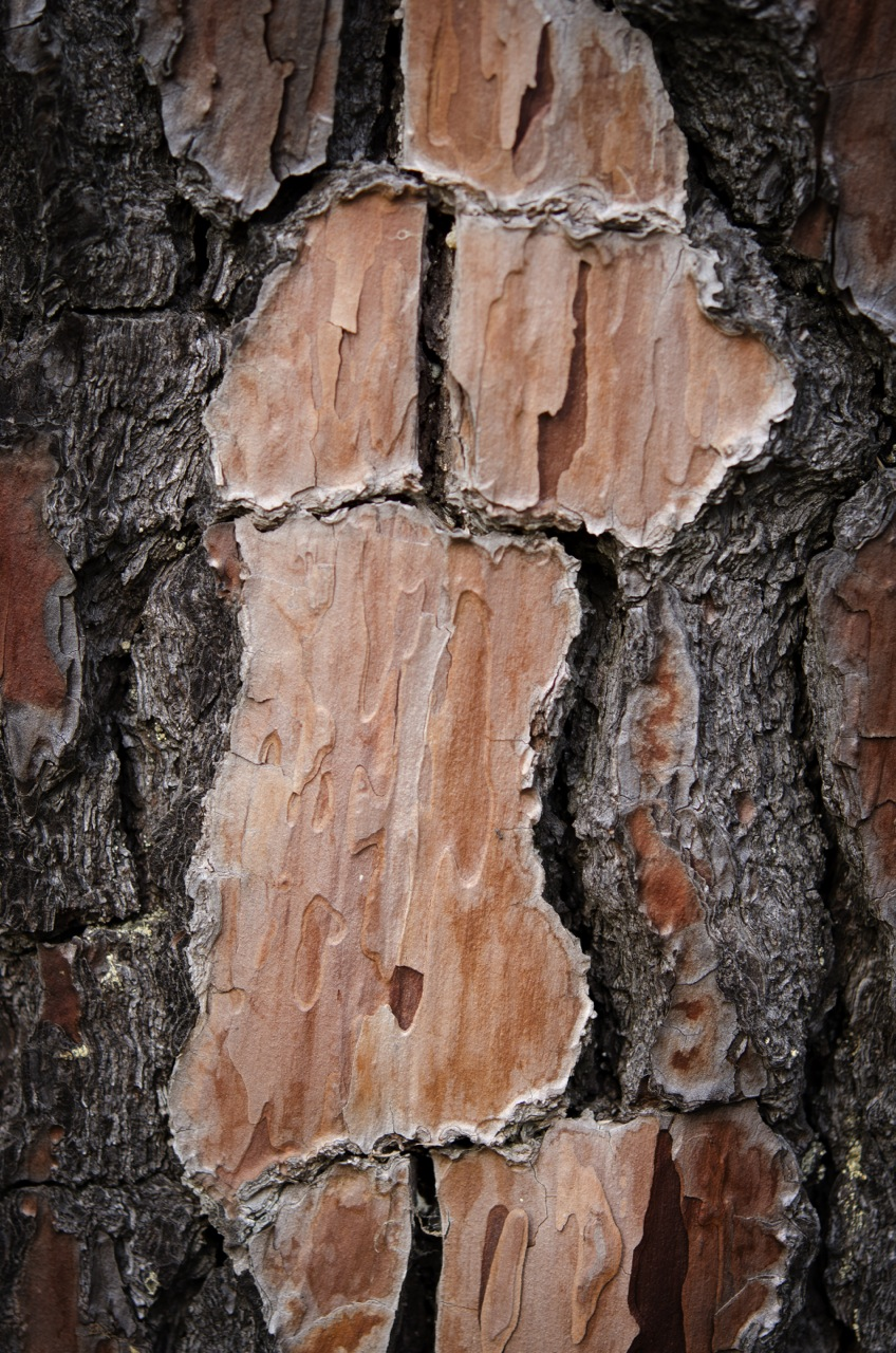 figure in bark_PRINT24inchesLongestEdge.jpg