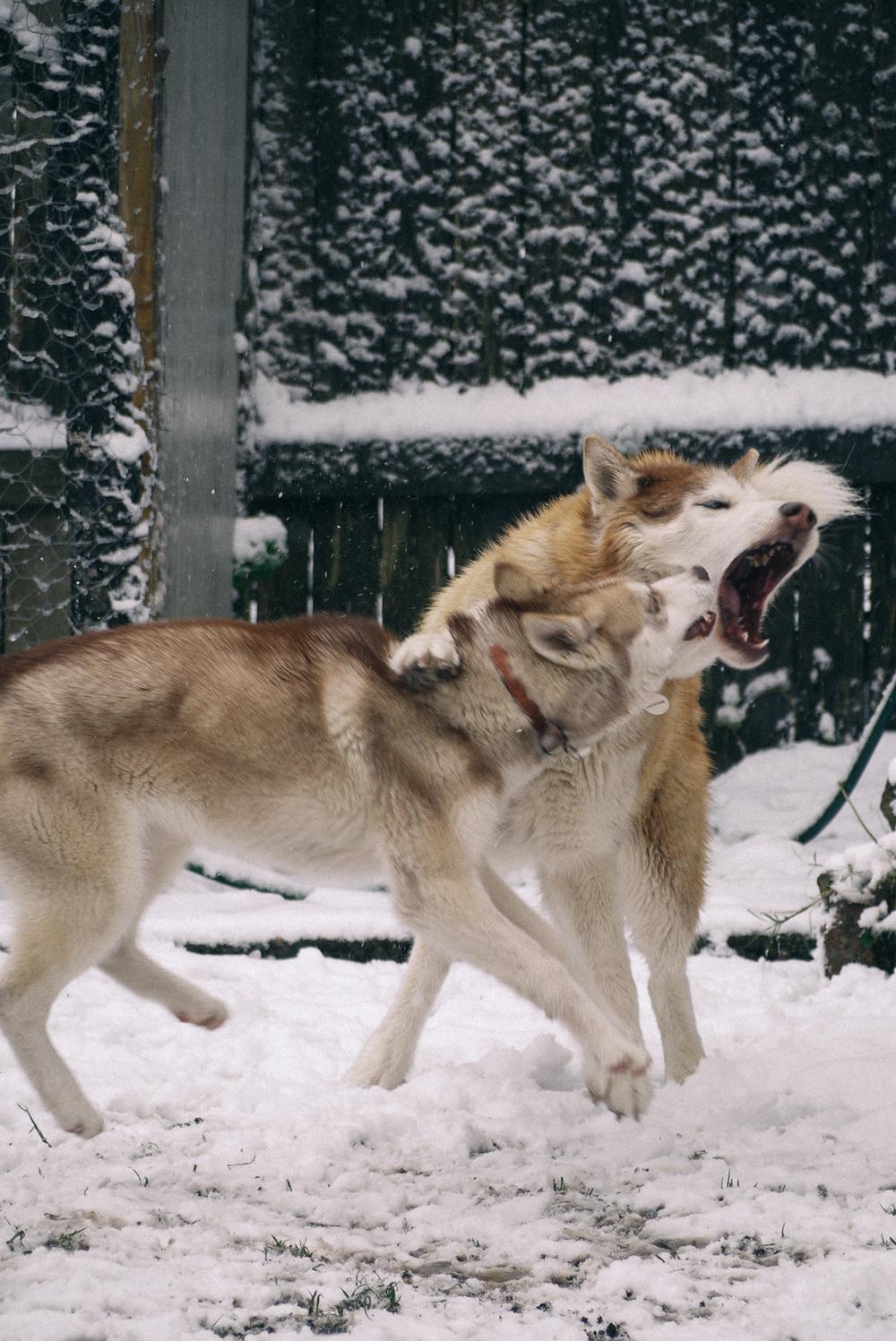 dogs cv.jpg