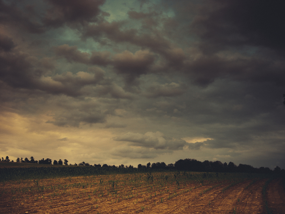 pa field cv.jpg
