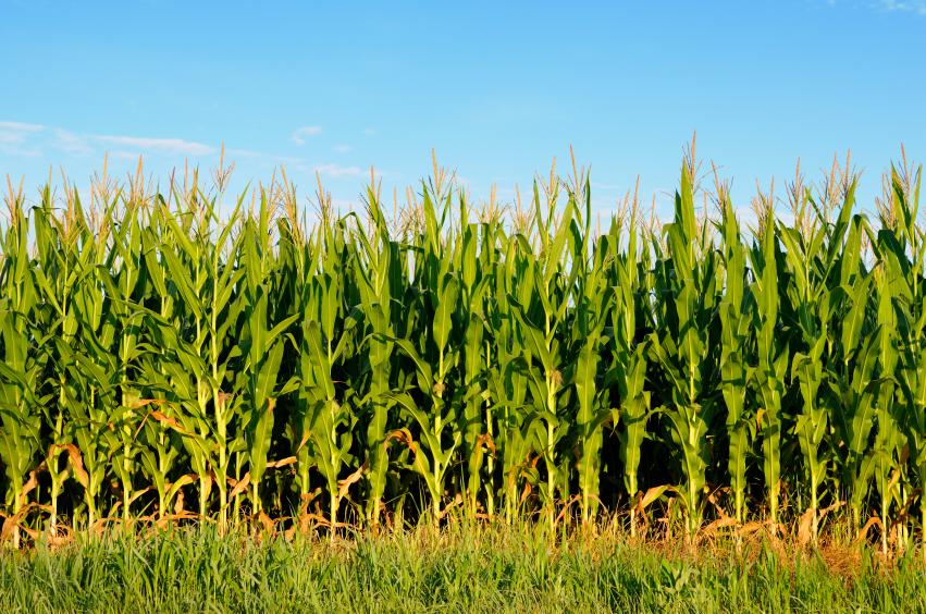 Monoculture: Industrial Sameness