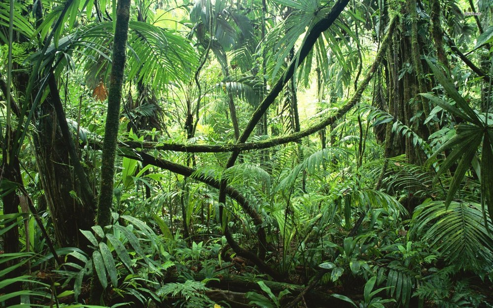 The Amazon Rainforest: Naturally Diverse