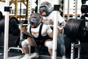 Who says Gorillas don't know squat?