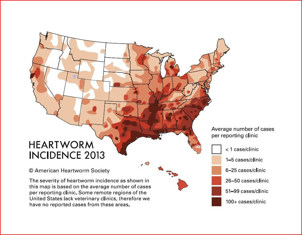 Image courtesy of the american heartworm society.