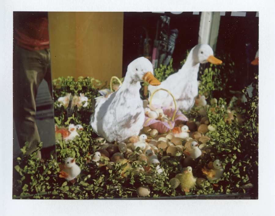 Spring Ducks in Window, West Village, Fuji FP100C in Polaroid Land Camera