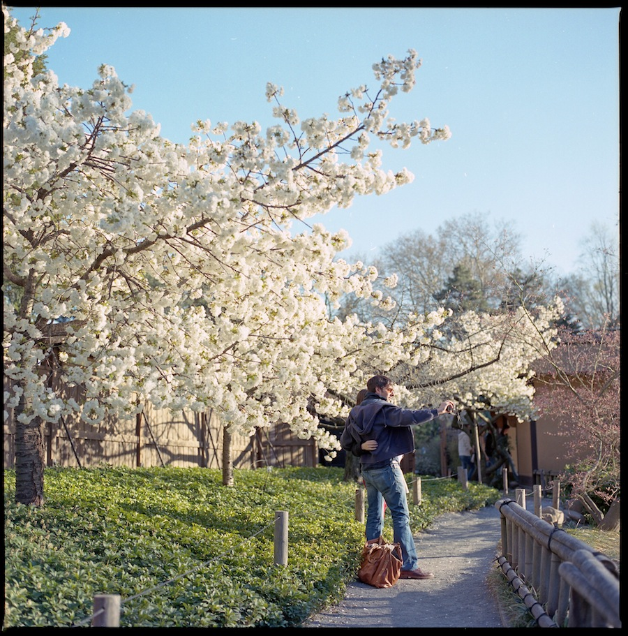 Self Shot Under White Blooming Tree, Brooklyn Botanic Gardens, Kodak Portra 400