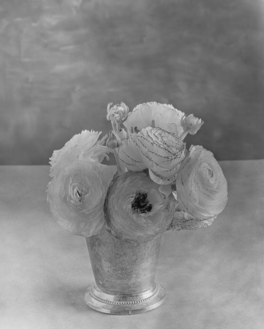 Ranunculus Flowers, 8x10 Fuji HR-T X-Ray Film