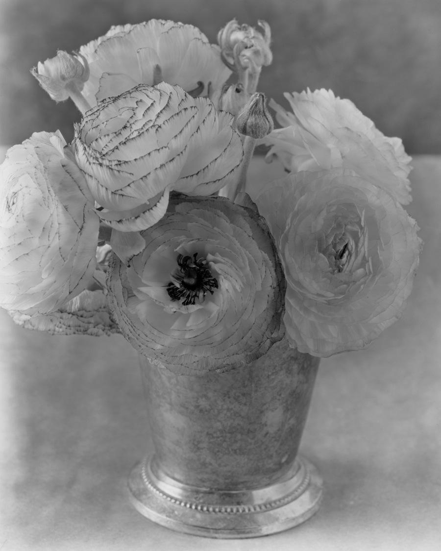 Ranunculus Flowers Closer, 8x10 Fuji HR-T X-Ray Film