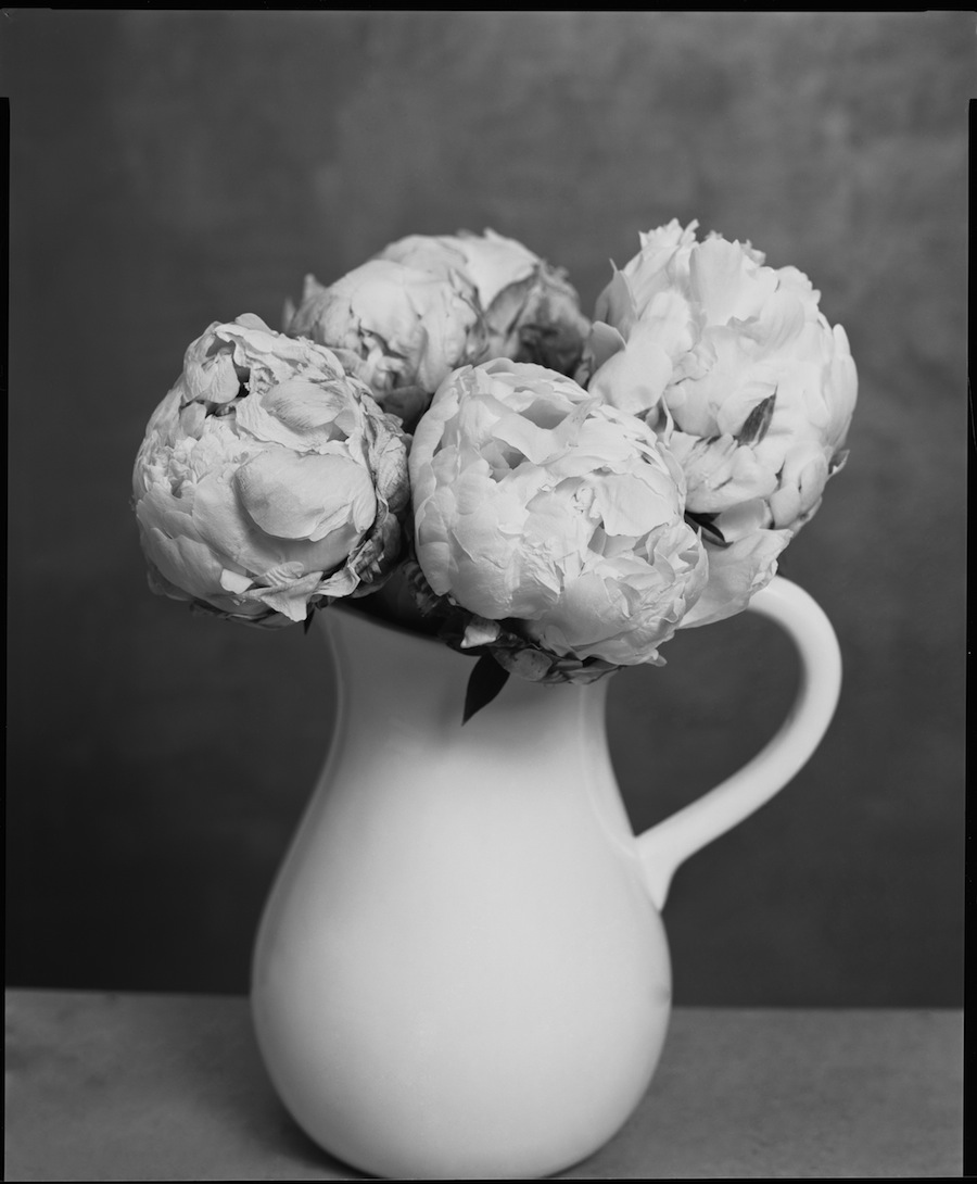 Peonies May 28, 8x10 Ilford HP5+