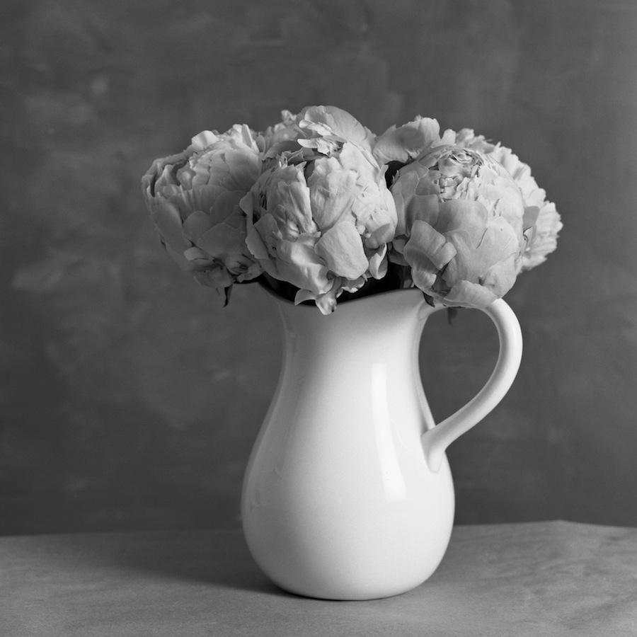 Vase of Peonies, Fuji Nepan Acros 100 Film