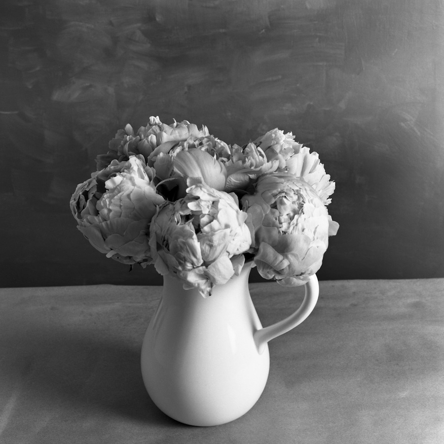 Vase of Peonies from Above, Fuji Neopan Acros 100 Film