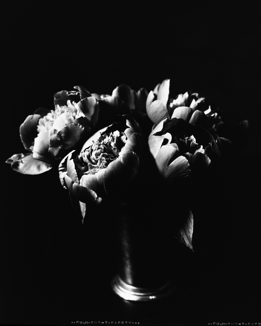 Peonies on 8x10 Fuji HR-T X-Ray Film (CLICK for Larger Version on Flickr)