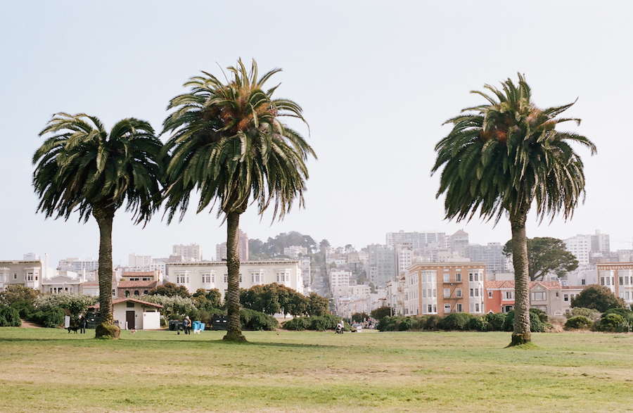 Palm Trees, San Francisco, Kodak Portra 160