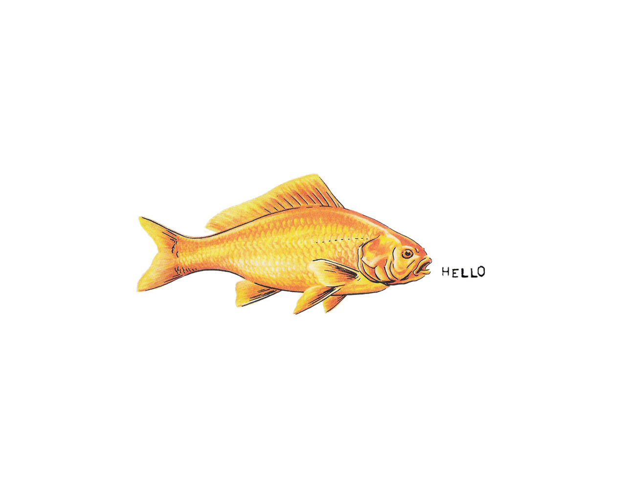 I'm thinking of developing a line of cards. This is the Hello Fish.