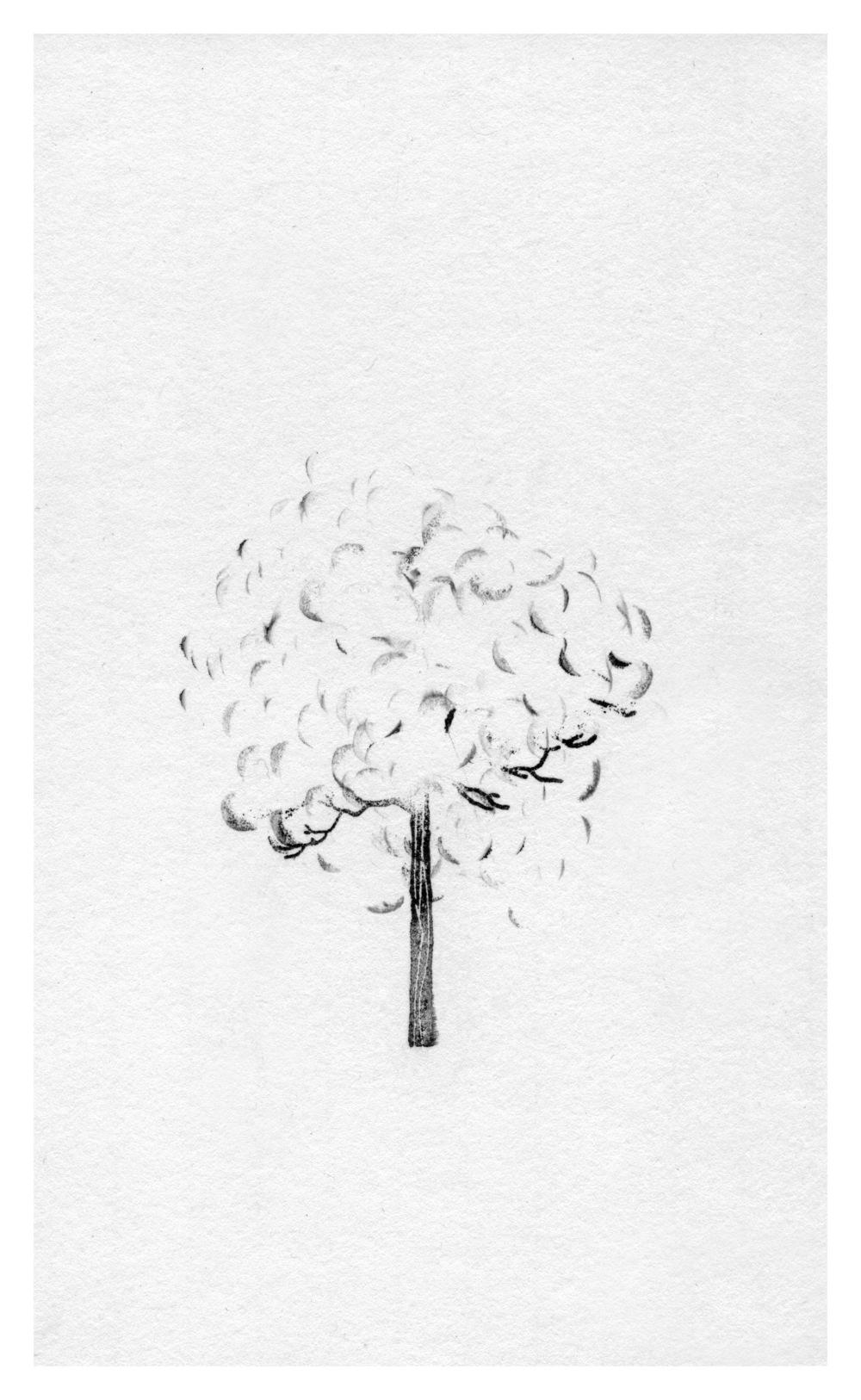 trees10.jpg