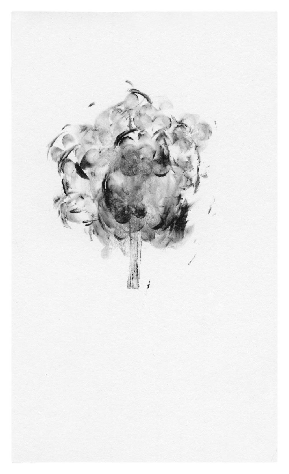 trees18.jpg