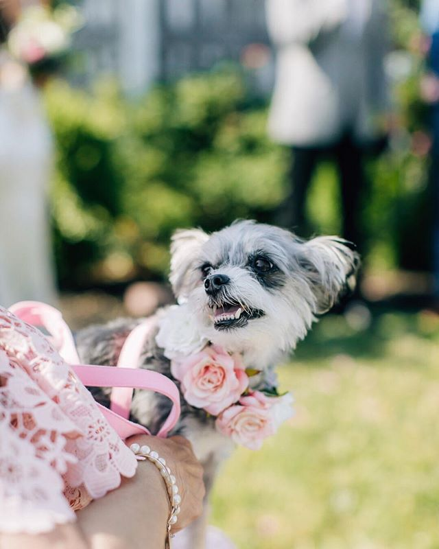 If you don't know by now, I love pups - especially on wedding days! This one knew her mom & dad were getting married and even let out a little bark when they sealed their vows with a kiss! For tips on including your dog in your wedding day, check out our blog (Website-  Weddings-  Bridal Resources). ⠀⠀⠀⠀⠀⠀⠀⠀⠀ ⠀⠀⠀⠀⠀⠀⠀⠀⠀ ⠀⠀⠀⠀⠀⠀⠀⠀⠀ #bestbrothersgardenwedding #weddingdogs  #weddingideas  #gardenwedding  #magdalenastudios