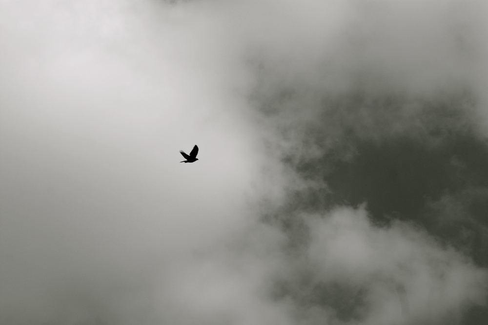 The hawk is always out when you're flying high.