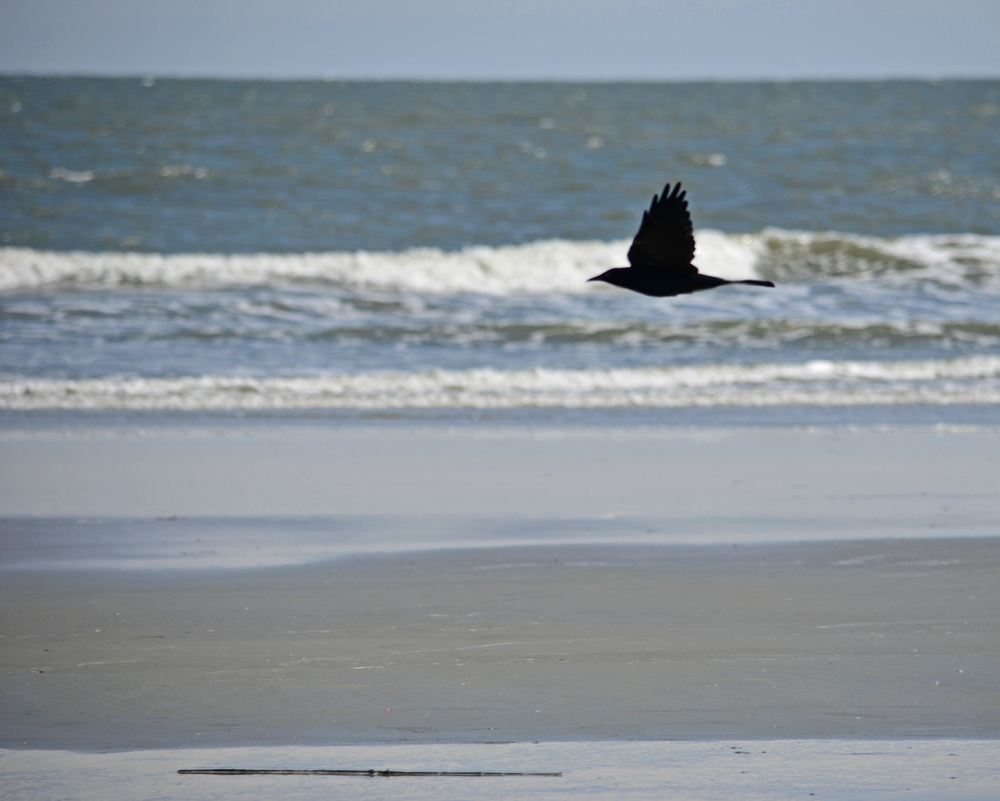 South Carolina 2013-09-23 283.jpg