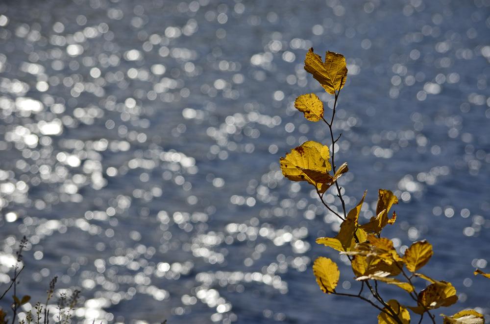 Audubon NH 2013-10-18 367.jpg