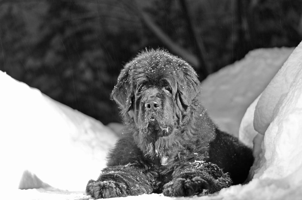 Skyla snow 2014-02-18 115.jpg