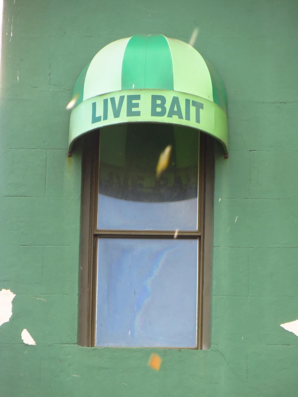 Live Bait #1 (actual live bait)
