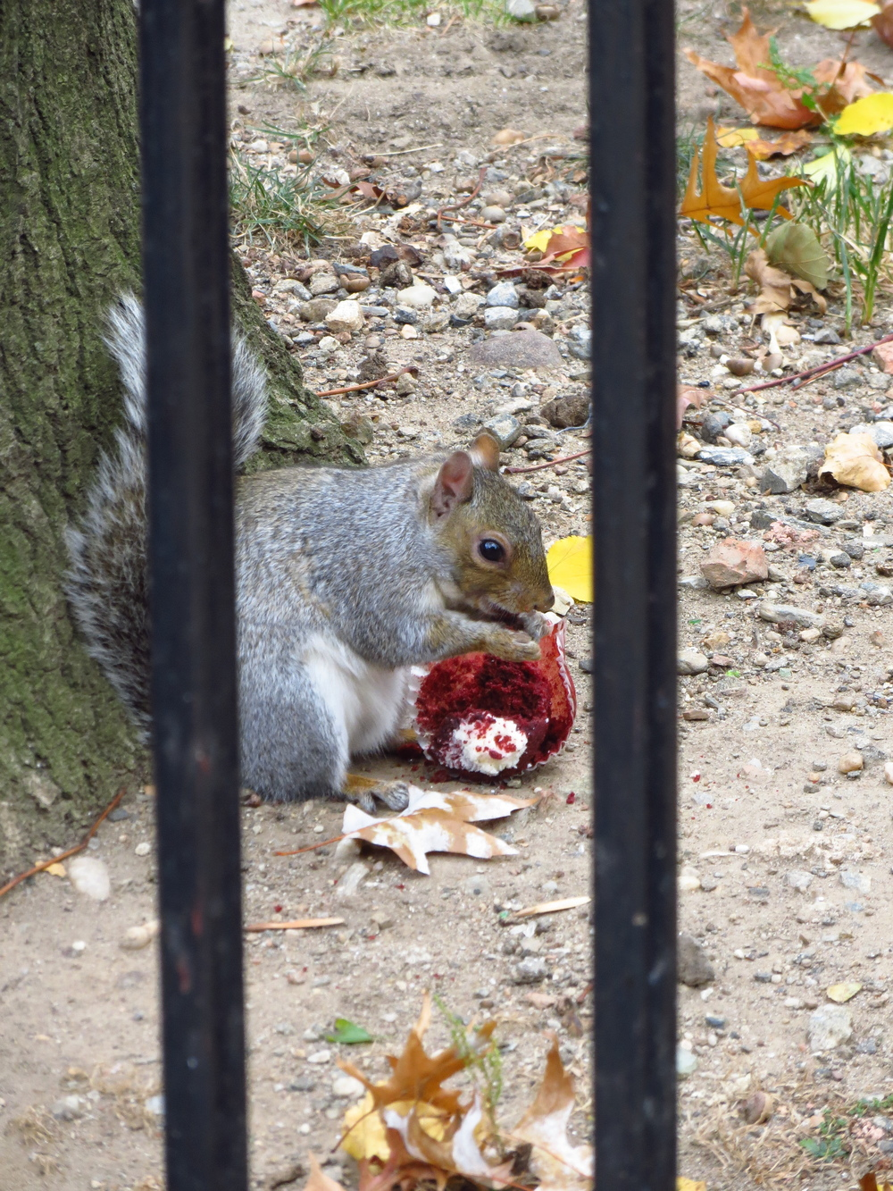 Squirrel w/cupcake