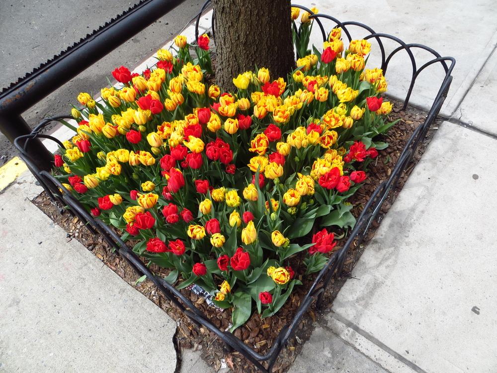 Gramercy Park (adjacent) flowers