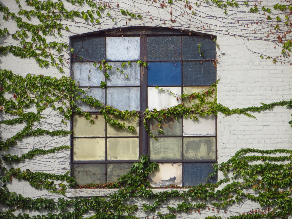 Vine-covered window