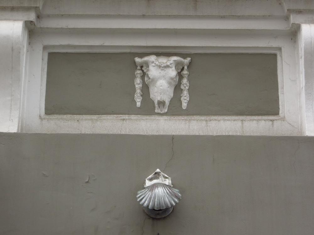 Cow skull & clam